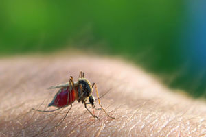Everything You Need to Know About Malaria Prevention
