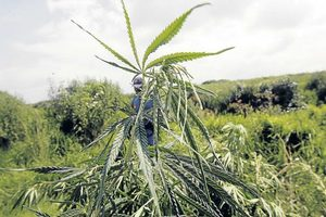 State help for Pondoland's green fingers